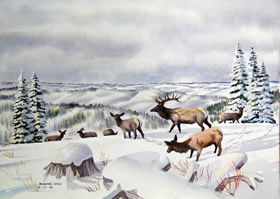 WILDLIFE IN WINTER NOTE CARDS